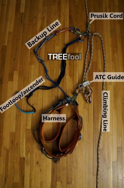 treefool.com