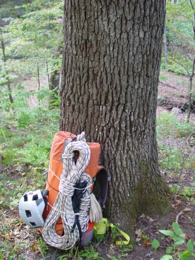 backpack at base of tree