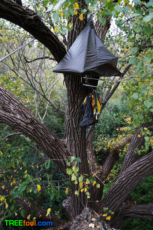 Fall Portaledge In Burly Tree