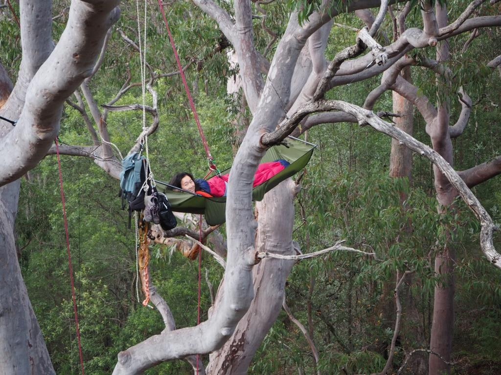 these are some of the best photos that have been sent to treefool    i find it very difficult to get photos far enough away to capture the entire canopy     stephanie hanging high in blue mountains australia   u2013  guest      rh   treefool